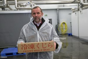"Kristjan Loftsson, Icelandic fishing magnate, holds a box of frozen whale meat during a Bloomberg Television interview at the Hvalfjordur whaling station in Hvalfjordur, Iceland, on Monday, Aug. 10, 2015. Iceland is one of the last pro-whaling countries, for historical reasons (in Icelandic ""stranded whale"" means ""great luck""), and, thanks to a long-standing, stubborn determination not to be lectured to by the outside world. Photographer: Arnaldur Halldorsson/Bloomberg"