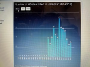 The number of minke whales killed from 1987 to 2015.